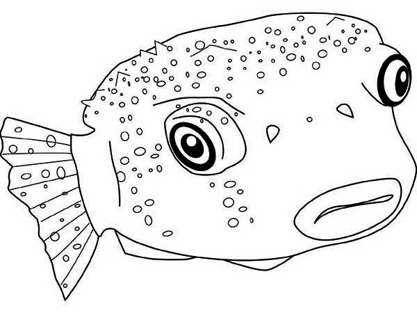 Poisonous Puffer Fish Coloring Page Kids Play Color Fish Coloring Page Coloring Pages Coloring Pictures