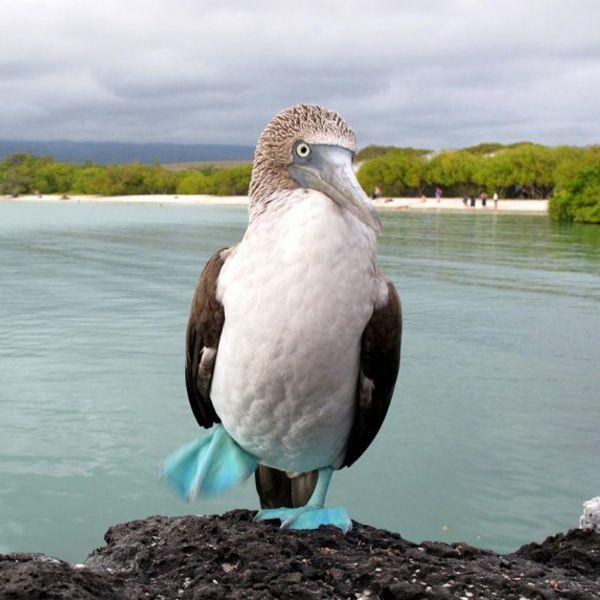 As ilhas Galápagos vistas por uma jornalista portuguesa.