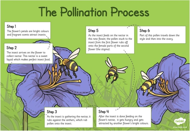What Is Pollination Twinkl Teaching Wiki Pollination Parts Of A Flower Plant Life Cycle
