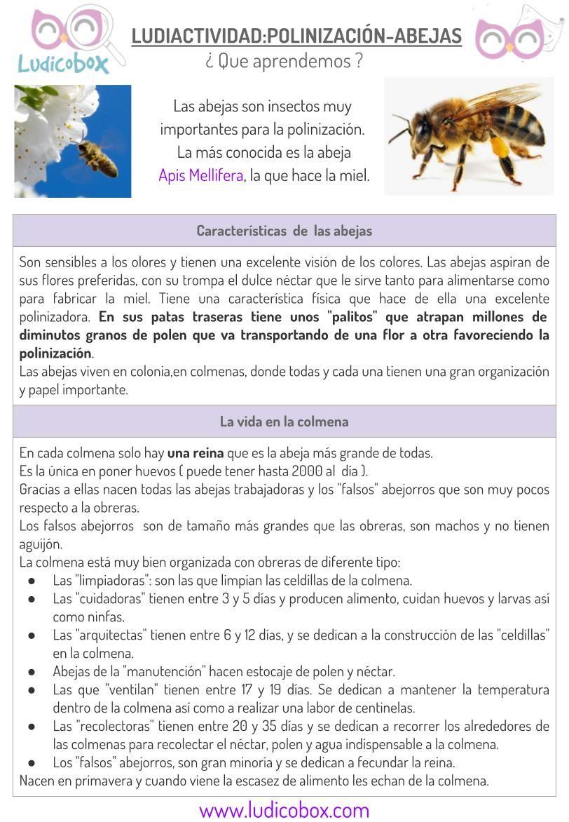 Polinización de las abejas: actividades para niños | Ludiactividades ...