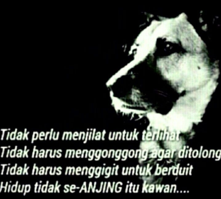 Situ Anjing Hahahaa Kata Kata Indah Anjing Hidup