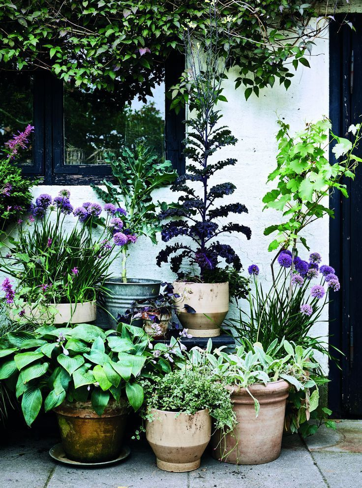 garden If you only have a small garden courtyard or balcony experimenting with container gardening is worth a thoughtIf you only have a small garden courtyard or balcony...