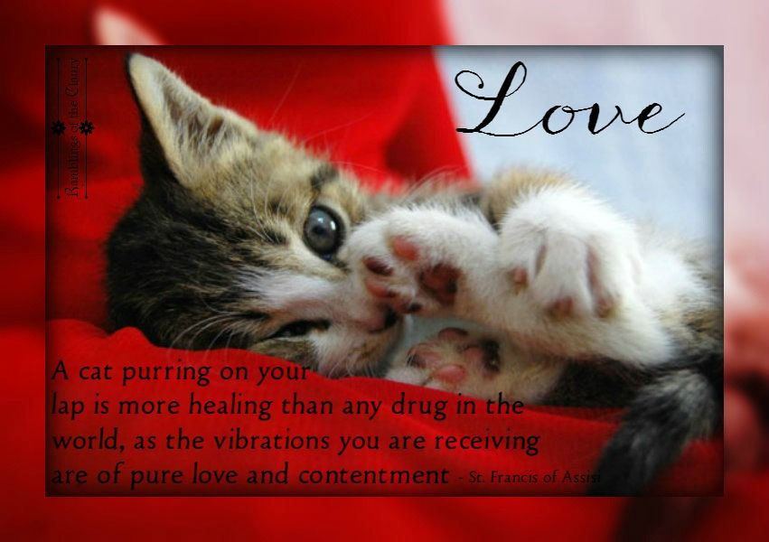 A Purring Cat Cute Baby Cats Baby Cats Purring Cat