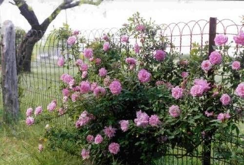 How To Install A Double Loop Ornamental Fence Wire