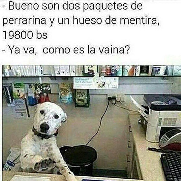 Imagenes De Humor Memes Chistes Chistesmalos Imagenesgraciosas Humor Http Imagenes De Humor Memes Divertidos Sobre Perros Imagenes Divertidas De Animales