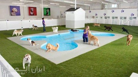 سالن Spa برای حیوانات به گزارش ایران المان شرکت گنسلر به سفارش