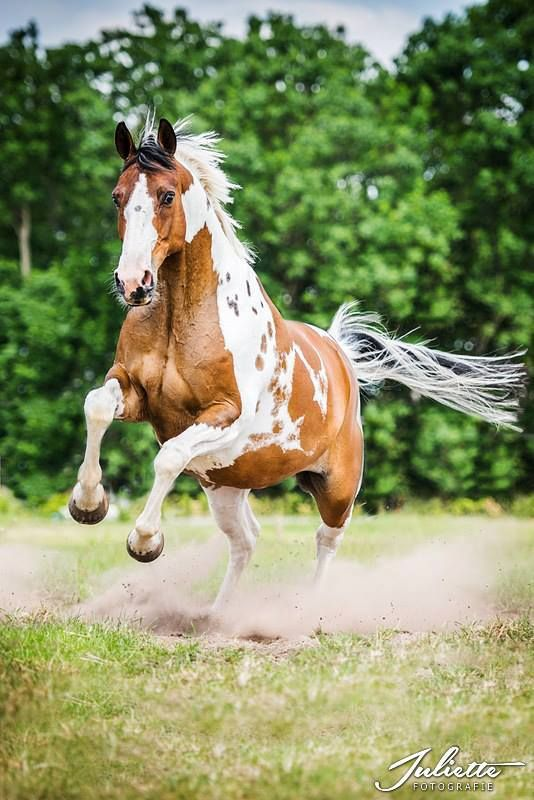 Photo by Juliette fotografie Arnhem Cowboy Magic