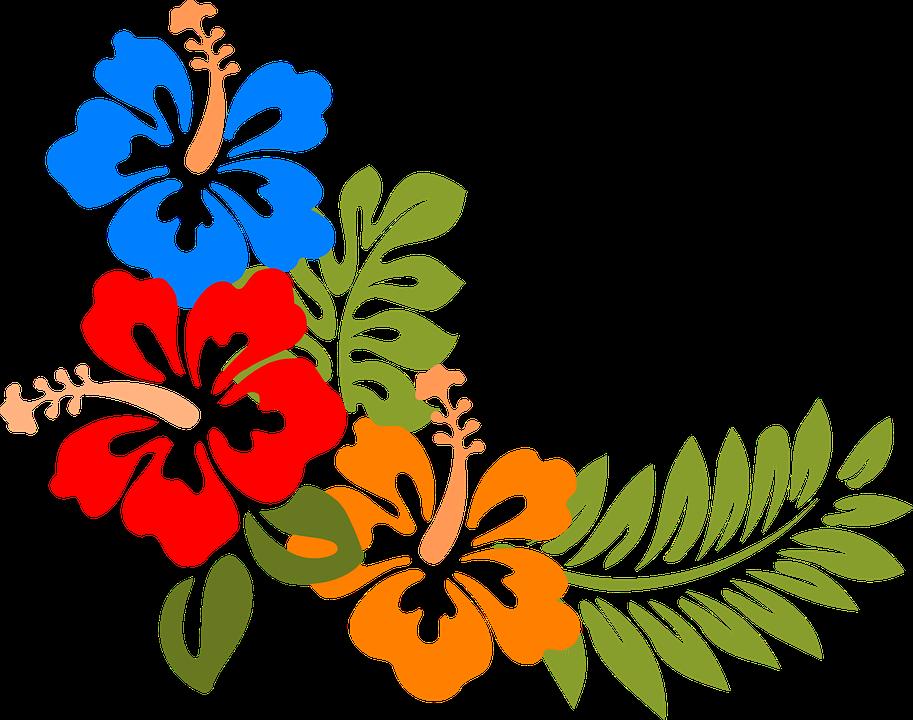 Imagen Gratis En Pixabay Hibisco Hawaii Flores Tropicales
