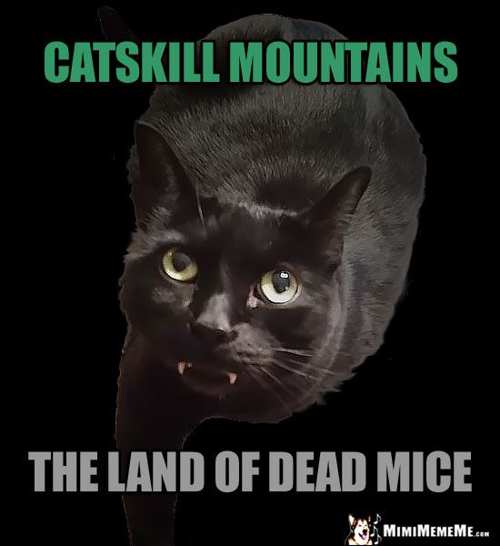 Fang Cat Humor Catskil Mountains The Land Of Dead Mice Funny Cat Memes Cat Jokes Cat Memes