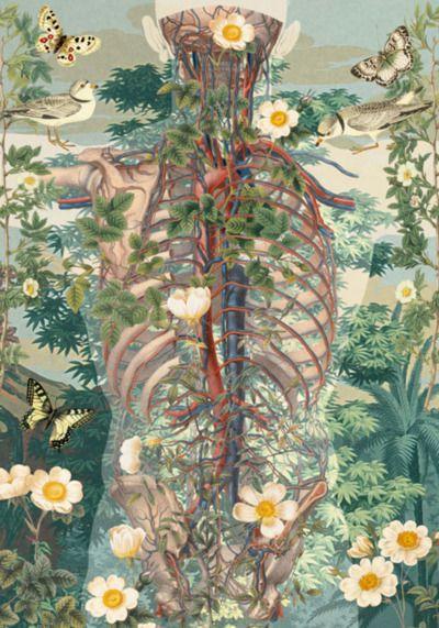 Pin de María J Camargo en Imaginario médico | Pinterest | Anatomía ...