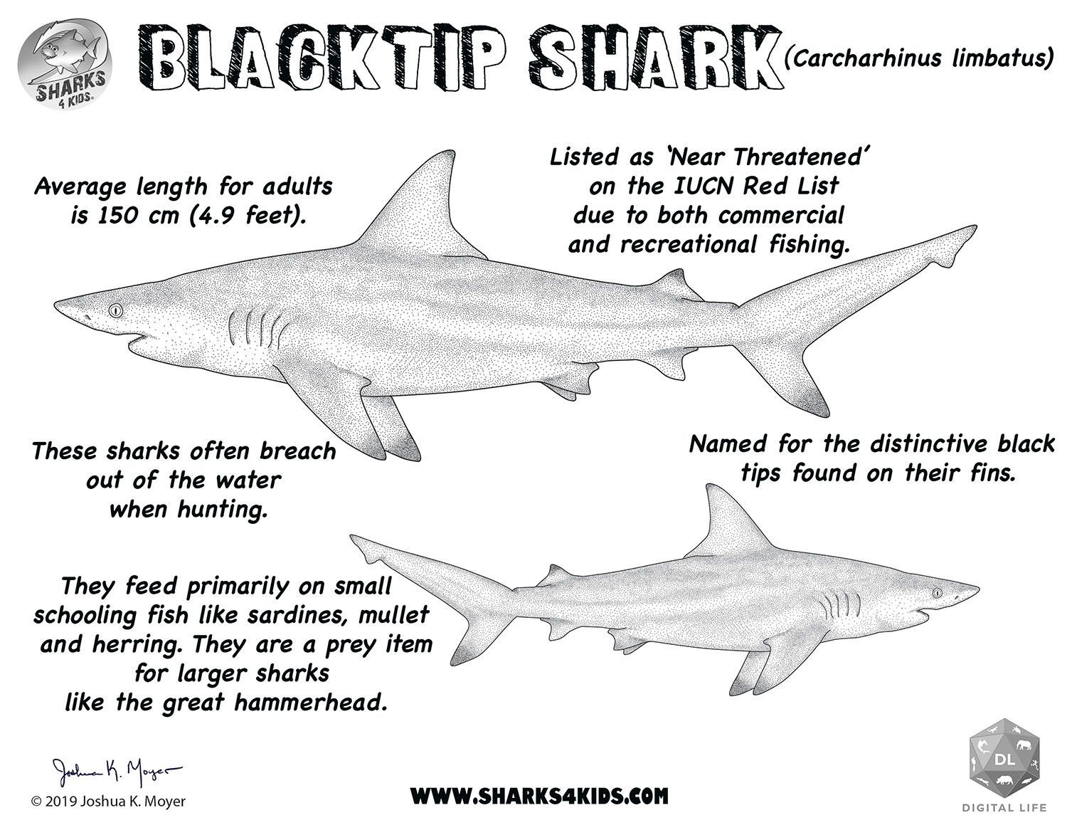 Learn All About The Blacktip Shark With Our Coloring Fact Sheet