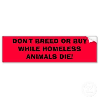 Adopt!! Don't buy!!