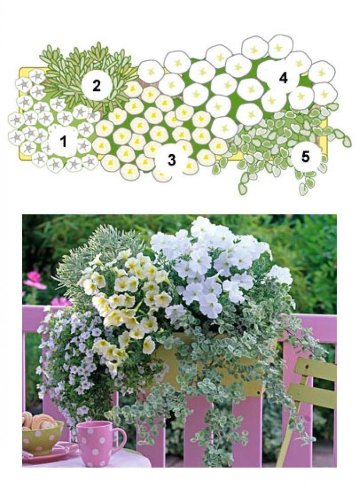 Balkonblumen: Fantasievoll Kombiniert Fruhjahr Blumen Balkonkasten Pflanzen