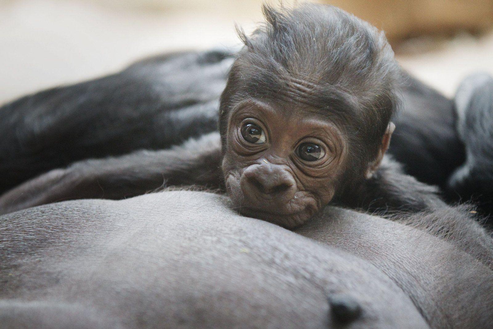 Gorily v praze online dating