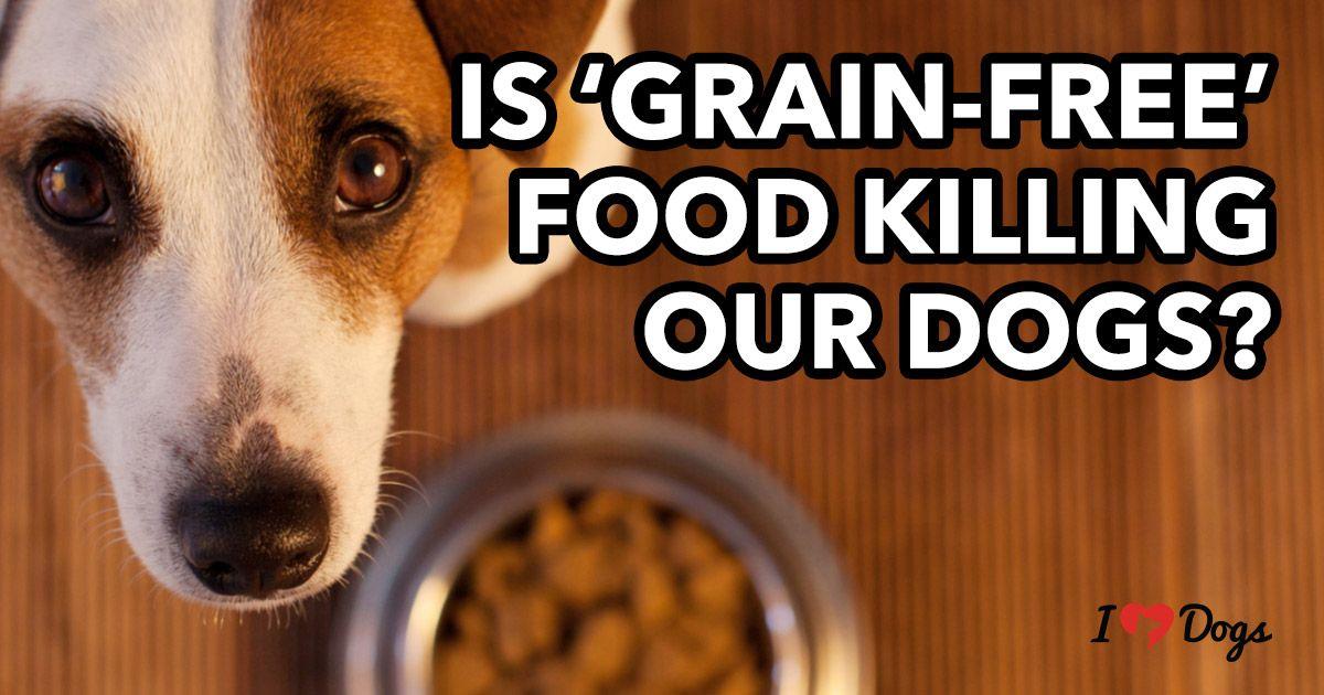 Pin On Dog News