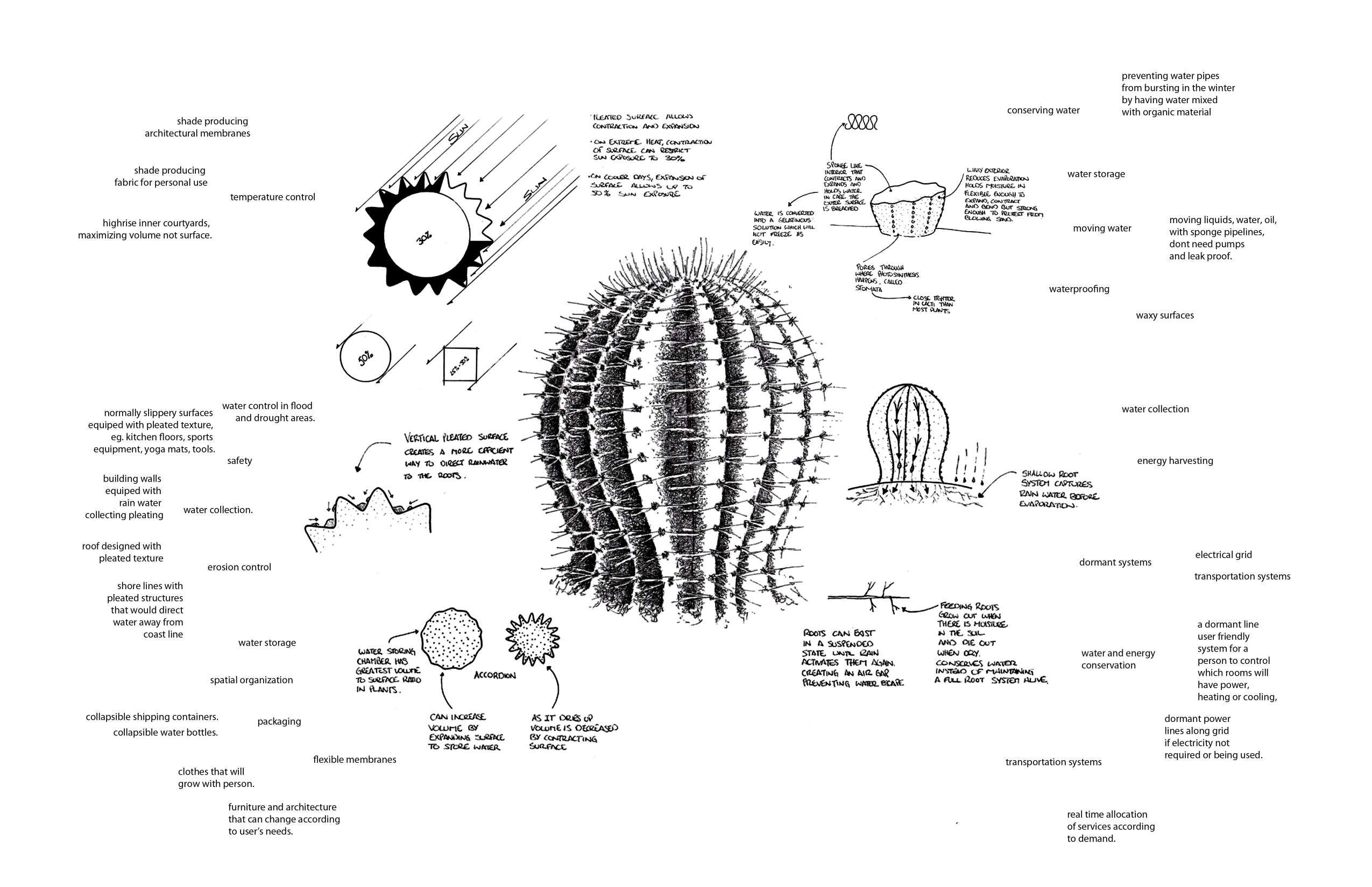 Learning From A Barrel Cactus Biomimicry Pinterest