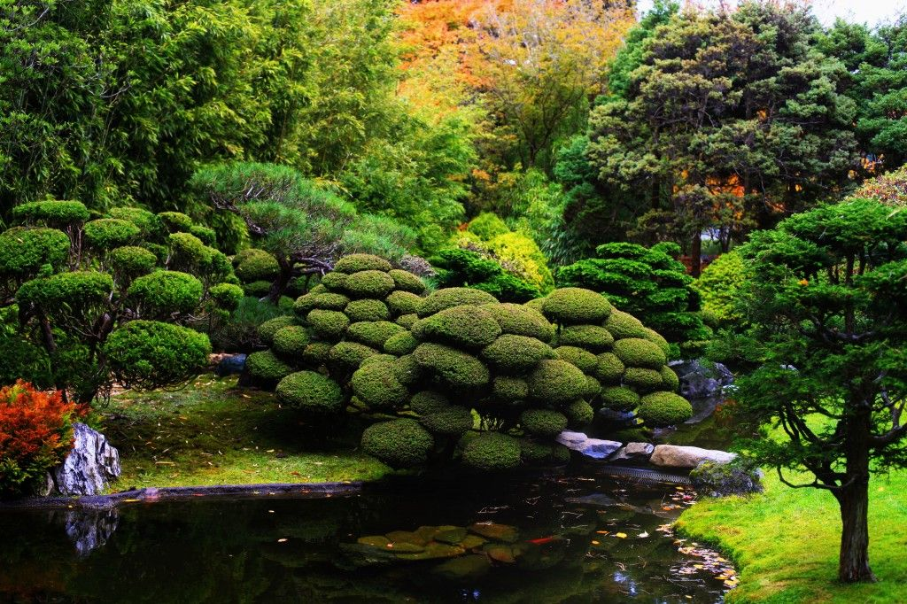 Koi Pond Japanese garden, Most beautiful gardens, Olive