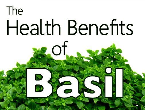 Health Benefits of Basil The Health Benefits of BasilThe Health Benefits of Basil
