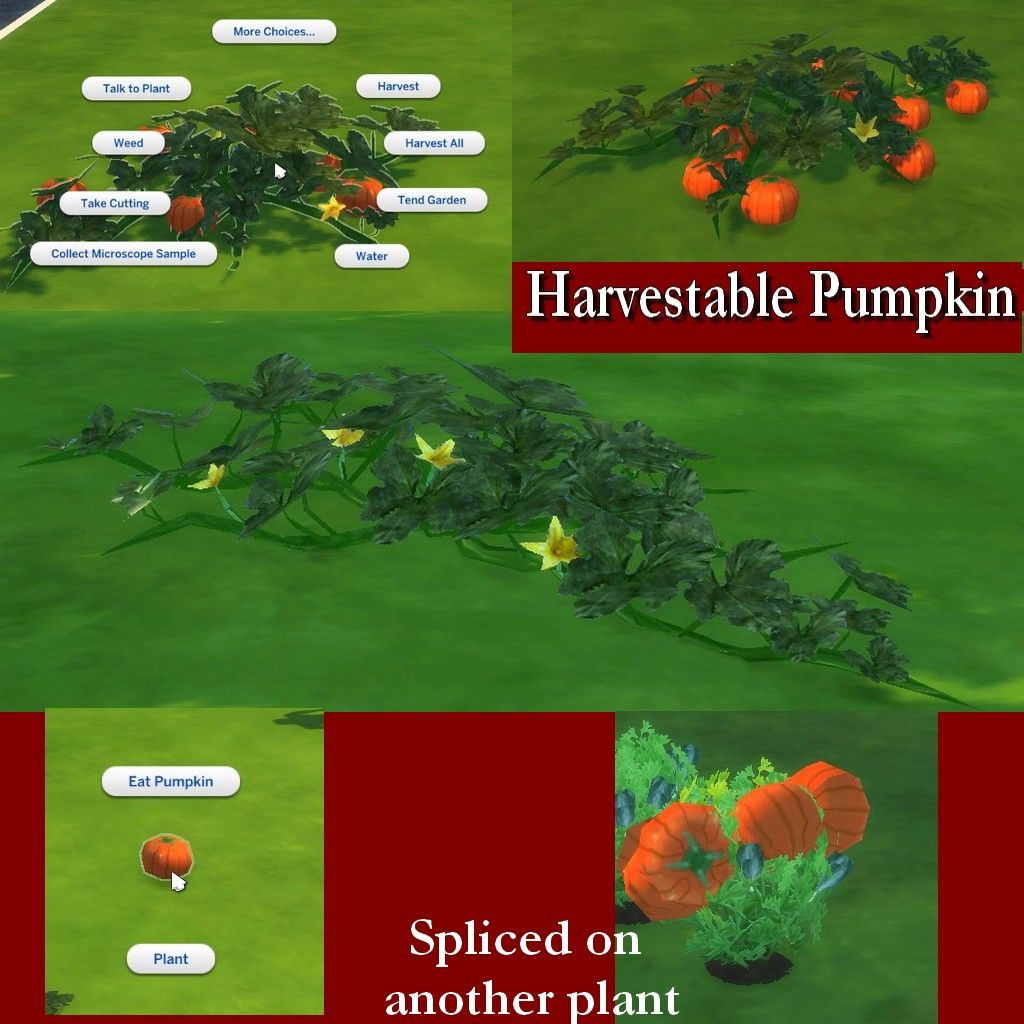 mod the sims harvestable pumpkin plant garden decor plants flowers sims 4 pinterest. Black Bedroom Furniture Sets. Home Design Ideas