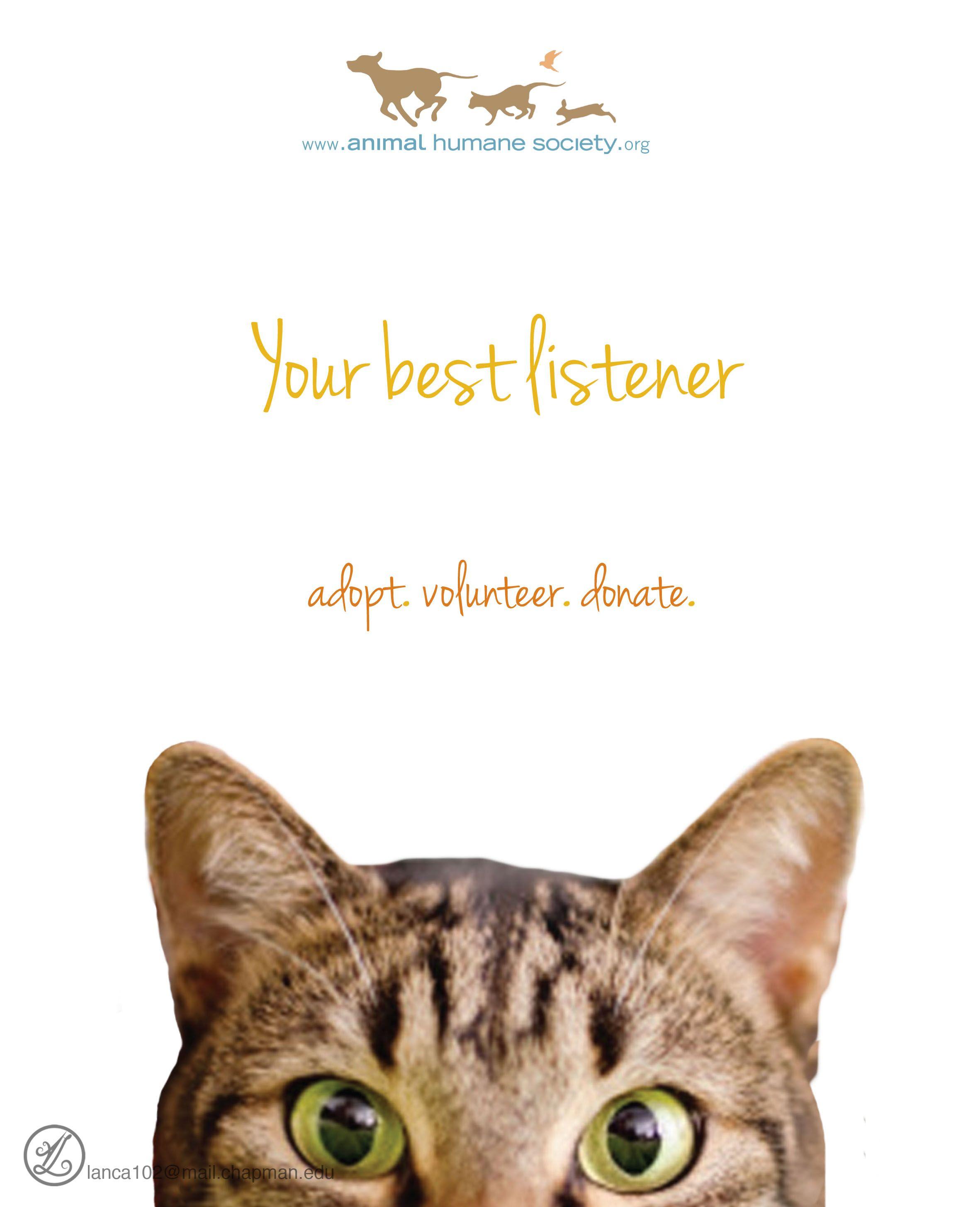Adoption Campaign Pet Adoption Event Animals Animal Photography