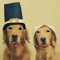 Happy Thanksgiving!!