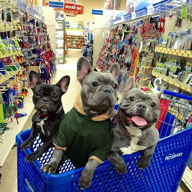 Pet Supplies Pet Accessories And Many Pet Products Petsmart Petsmart Happy Animals Pets