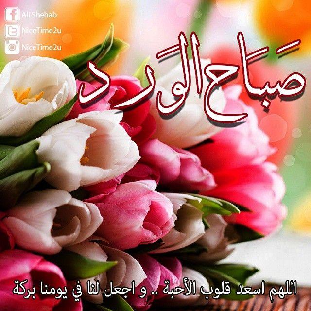 Random Posts صباح الورد على كل الاحبة Good Morning Flowers Rose Good Night