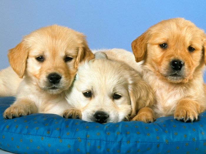 These international pet names are so cute, you'll want to