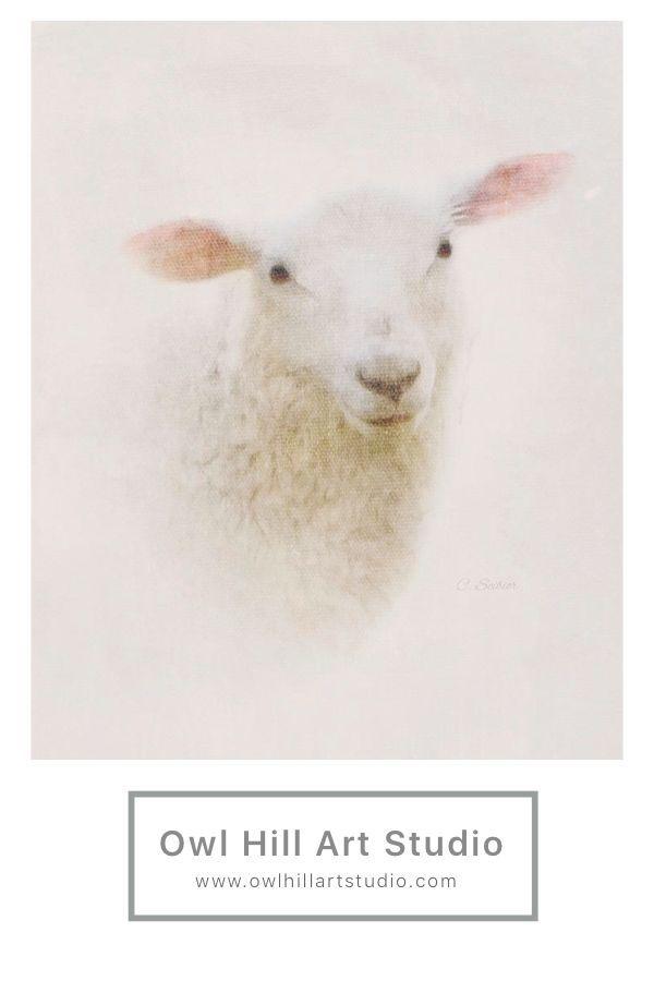 Cute little sheep portrait.  #sheep #sheepworld #animallovers #easterdecor #easter #lamb #springdecor #springstyle #spring #artprints #portriature #animalportraits #farmhousedecor #farmhousestyle
