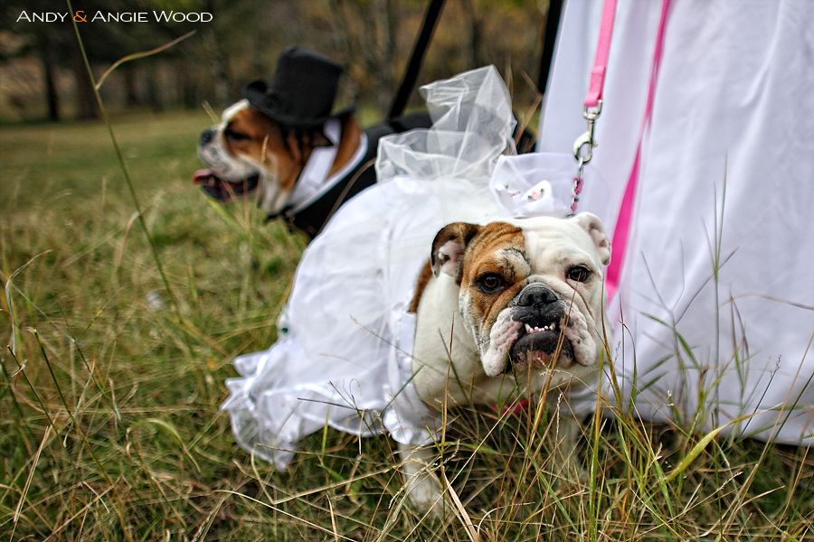 Dogs Wedding Photography Oh My Word I Lurv This So Much