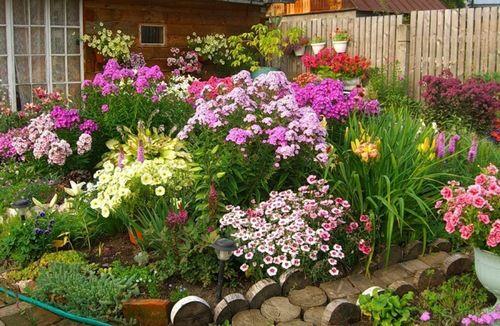 Цветы для сада (55 фото): неприхотливые для ленивых ...