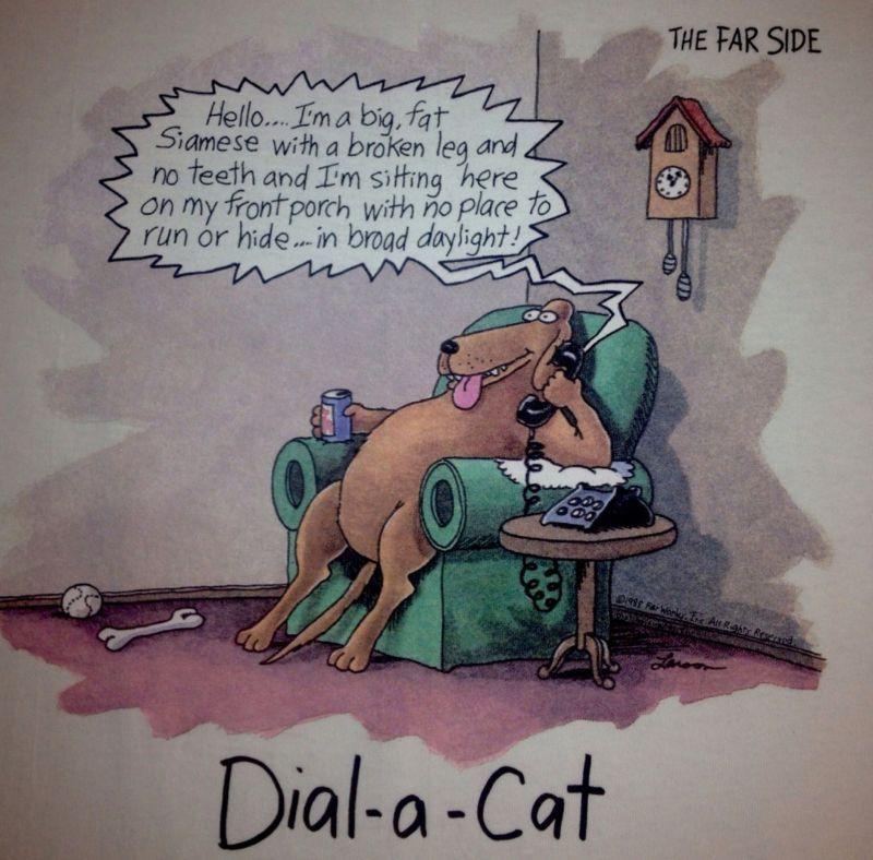 Dial-a-Cat