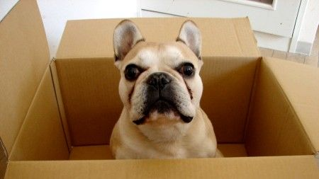 7 Tips For Moving With Pets Your Pet Dogs Pets