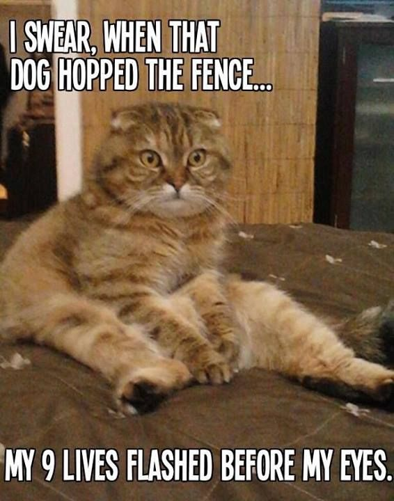 Cute cat being super funny! LOL :) We love LOLCats at ...