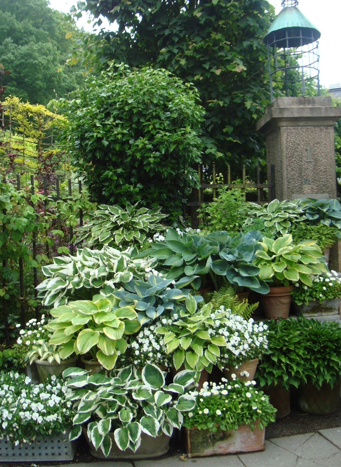 Hostas in containers with white impatiens dispersed for Landscaping with potted plants