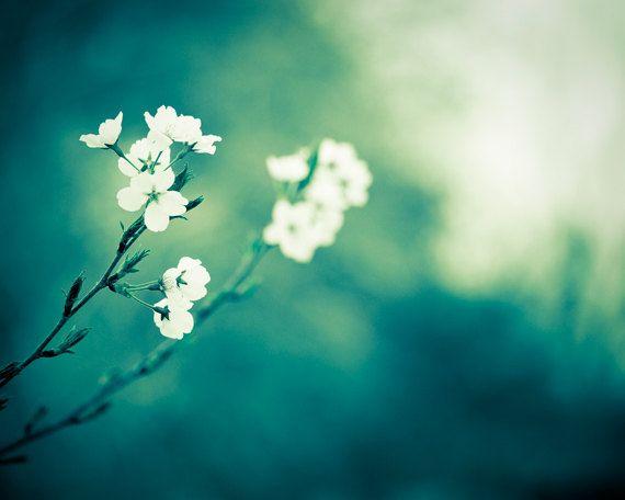 Flower Photography Dark Teal Green White Nature Decor Fine Art