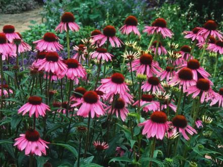 Grow Your Own Kitchen Countertop Herb Garden Plants 400 x 300