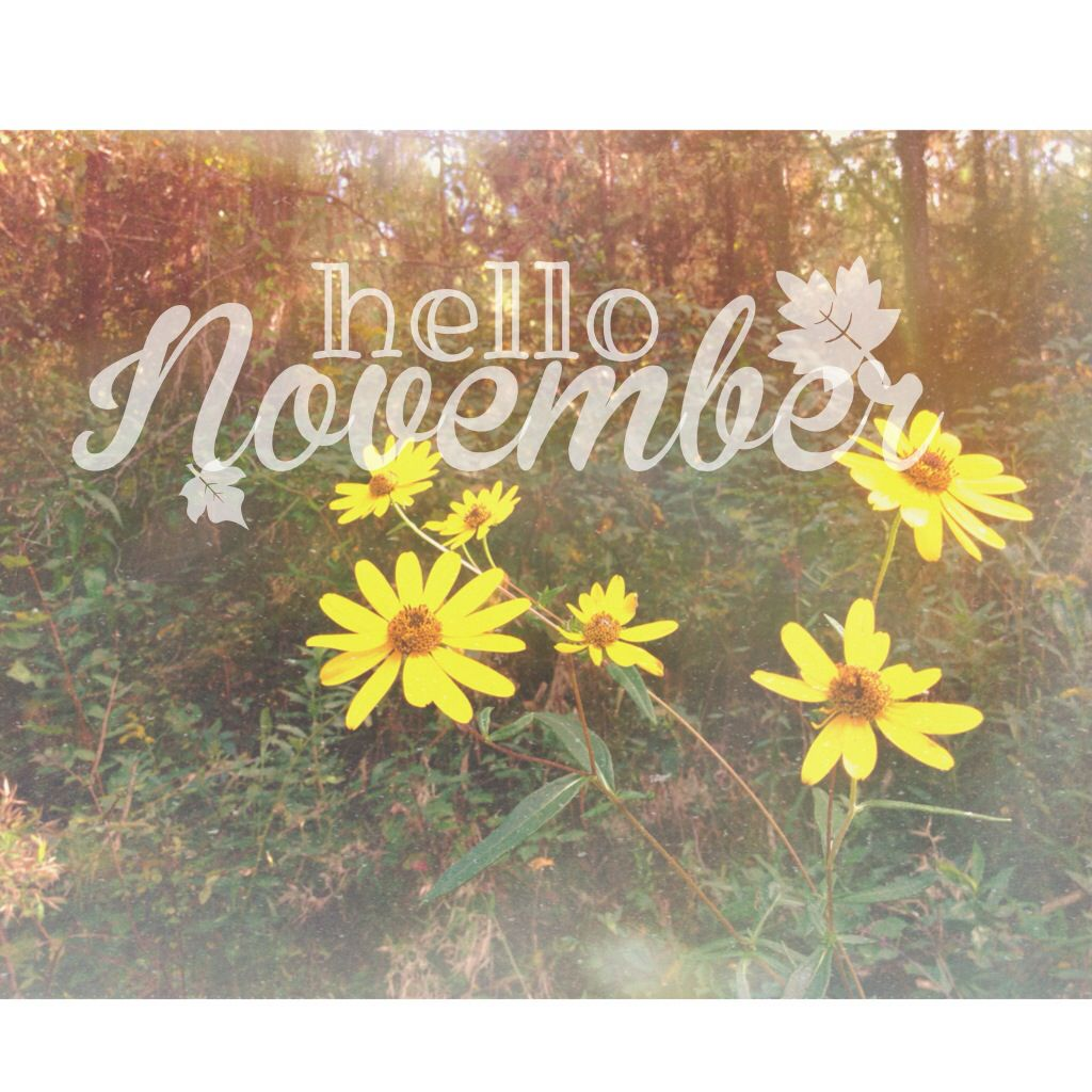 Hello, November.  Quotes/Funny  Pinterest