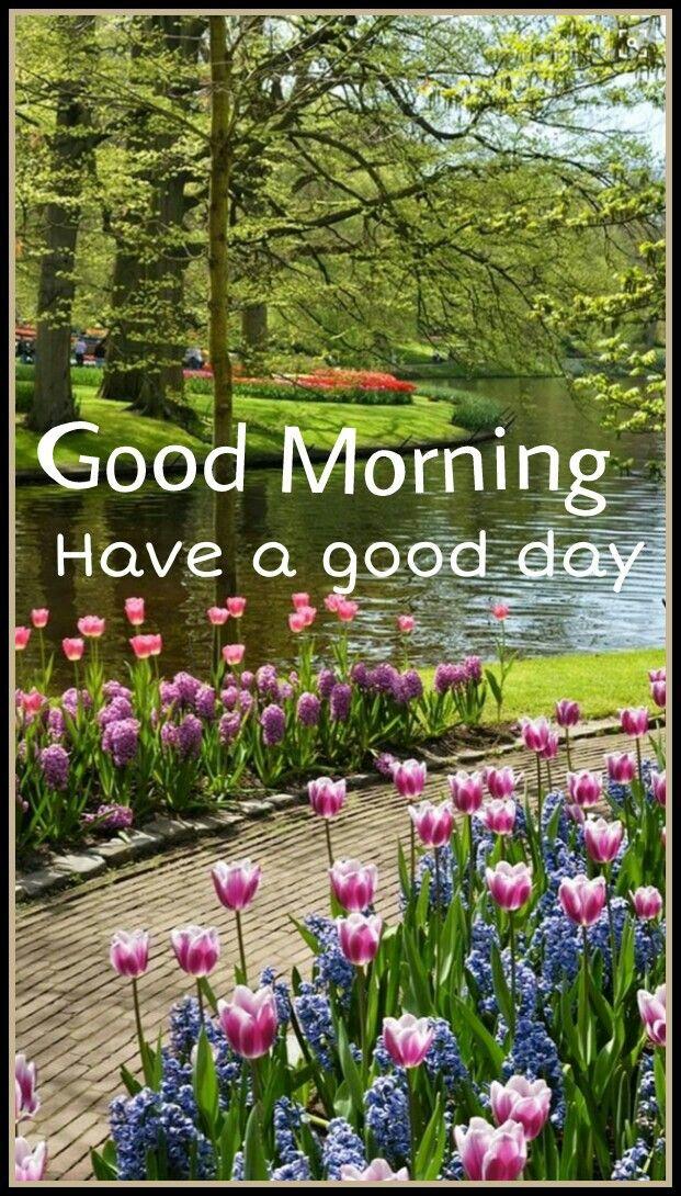 Good Morning Good Morning Spring Garden Tulips Nature