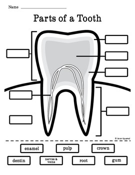 Dental Health Tooth Diagram Freebie Dental Health Week Dental Health Preschool Teeth Diagram
