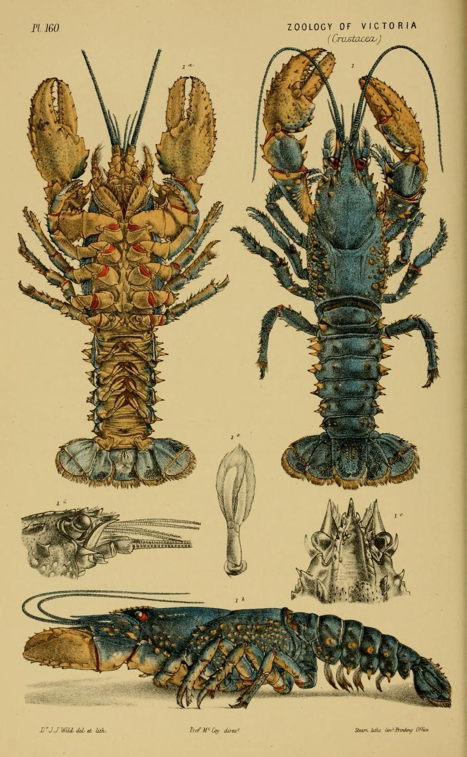 Decade 16-20 - Natural history of Victoria. - Biodiversity Heritage ...