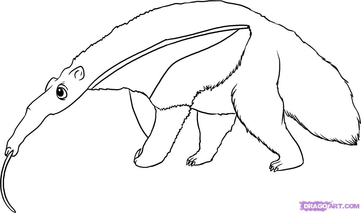Uncategorized Anteater Coloring Page free coloring picture of an anteater how to draw step 6