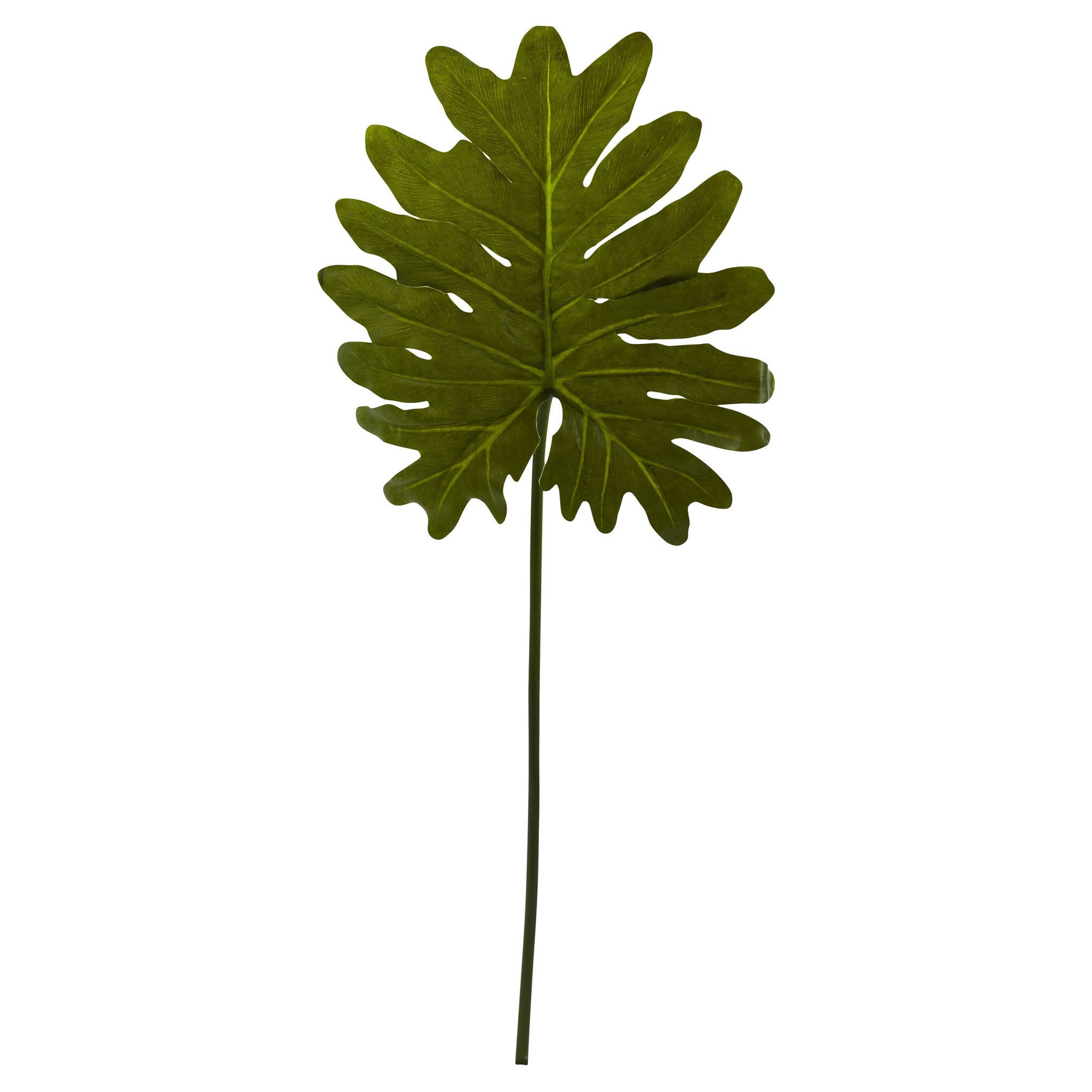 Selloum Philo Single Leaf Stem 12pk