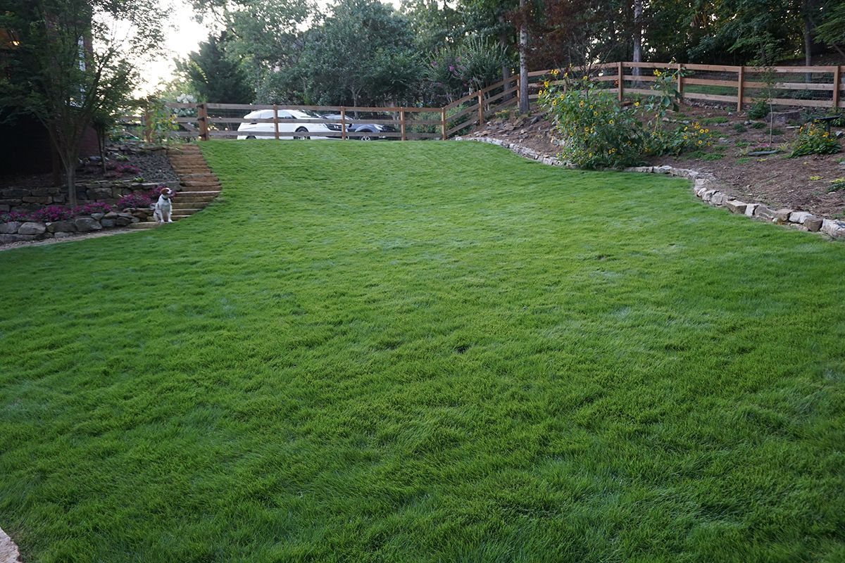 Want Low Maintenance Turf Our Marvel Ii Is A Gorgeous Dense Zoysia That Works Well In Sun And Shade And Proves Itself In B Turf Outdoor Decor Low Maintenance
