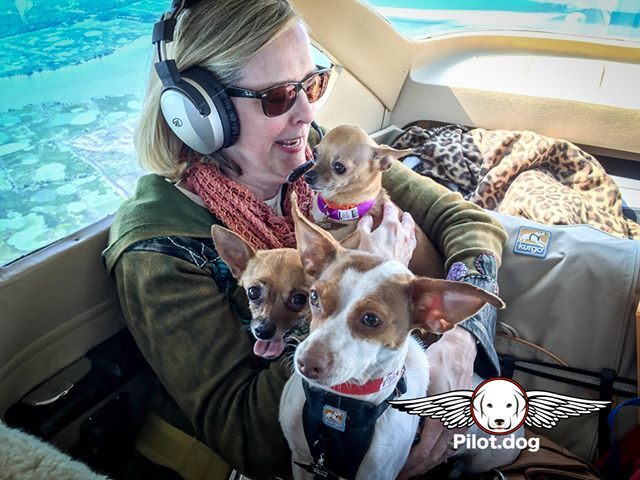 Hey He S Taking Our Picture Better Smile This Flight Is For Four Dogs That Were Either Abandoned Or Put Up For Free On Craigslist Pet Vet Dogs Rescue Dogs