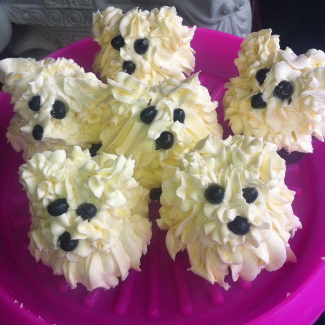 Maltese Terrier cupcakes