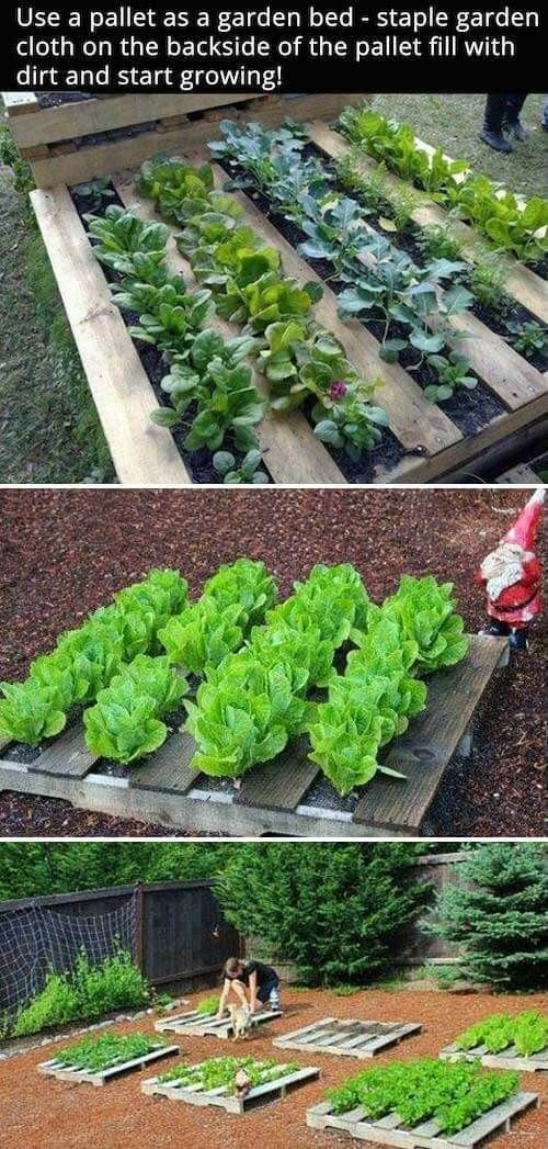 DIY Pallet garden | How to Build a Raised Vegetable Garden Bed | 39+ Simple & Ch…