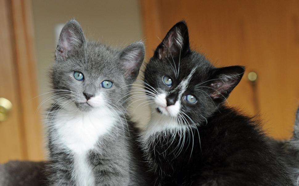 Chat Gris Chat Noir Kitten Pictures Cat Wallpaper Cute Black Cats