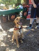 Many thanks to Soi Dog Australia volunteers Lee and Louise
