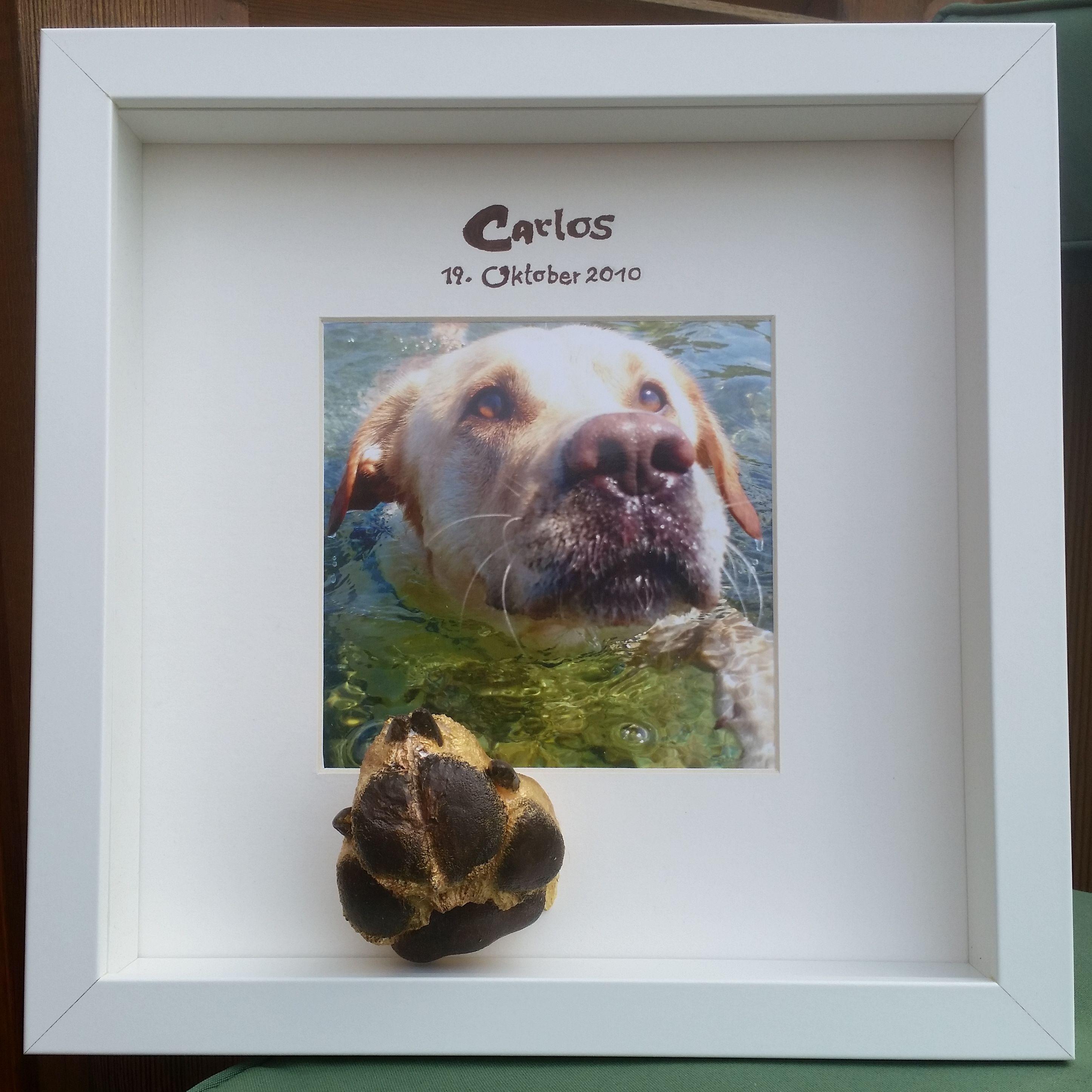3D Hunde Pfotenabdruck vom Labrador Carlos in einem tiefen Rahmen ...